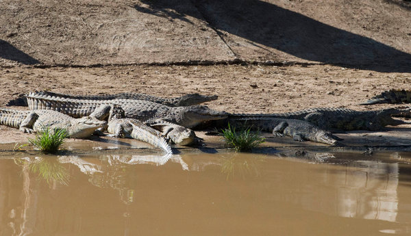So Sad! 65 Year Old Woman Commits Suicide By Jumping Into A Pool full Of Crocodiles