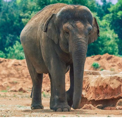 [VIDEO, PHOTOS] Elephant Stones 7-Year-Old Girl To Death In Zoo In Morroco