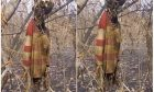 woman-suicide hanging on tree-1