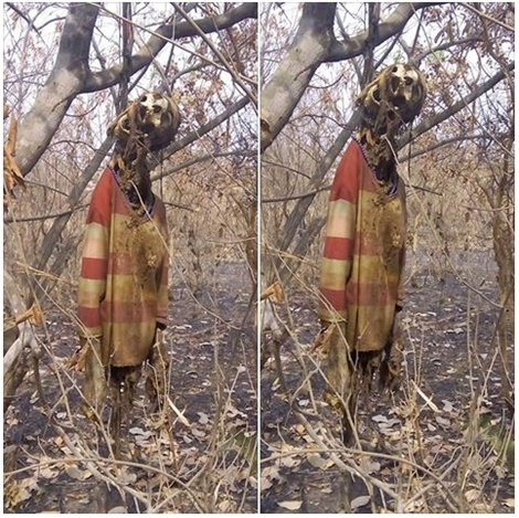 [PHOTOS] Corpse Of Woman Missing For Months Found Hanging On A Tree In Kogi