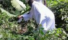 Ex-Gambian-President-Yahya-Jammeh-spotted-farming-in-Equatorial-Guinea3